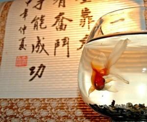 acuarios feng shui