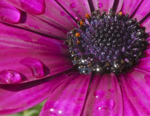 El poder del Color Púrpura Feng Shui