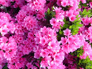 Limpieza energ tica feng shui limpieza de primavera for Como eliminar el desorden con el feng shui