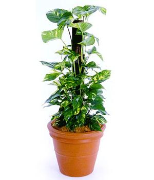 Feng Shui Plantas: Lo que necesitas saber para crear Buen Feng Shui con las Plantas