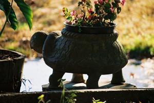 tortuga celestial feng shui