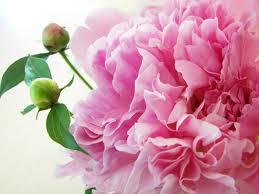 Conoce las Flores Feng Shui y su Aplicación