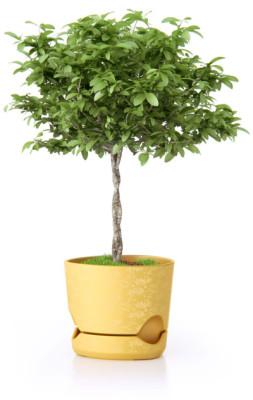 Feng shui para atraer el dinero for Planta del dinero feng shui