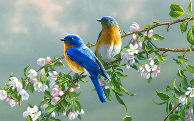 El Poder de las Aves en el Feng Shui